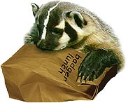 Photo of a badger holding a lunch bag