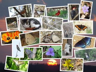"""One of the many collages I created over the weekend. Isn't my kitty """"Hodge"""" the cutest little thing!"""