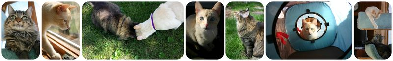 Kitties2