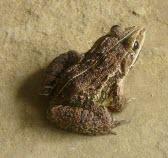 Frog-332013_1280