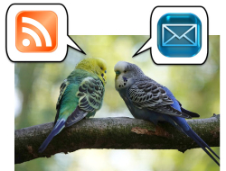 RSS or Email?